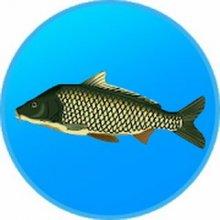 Реальная Рыбалка. Симулятор рыбной ловли