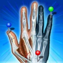 IMAIOS e-Anatomy Premium 4.2 (Android)